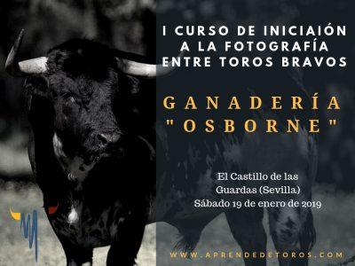 Descuento en el curso de iniciación a la fotografía entre toros bravos de Aprende de Toros